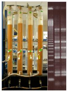 fermentation tubes & image genetics